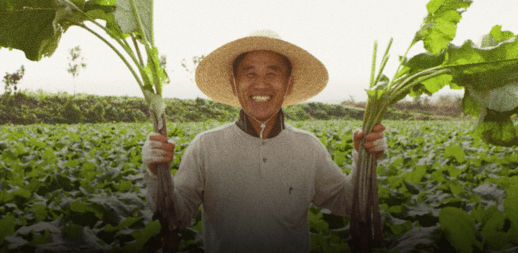 From farm to your table