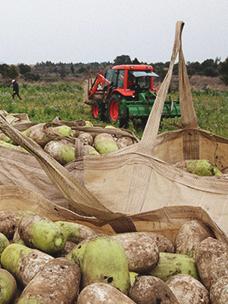 CJ프레시웨이, 농가 계약재배 여의도 면적 4배로 확대