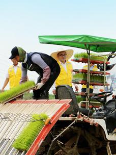 CJ프레시웨이, 쌀 계약재배 지역서 상생협력 행사